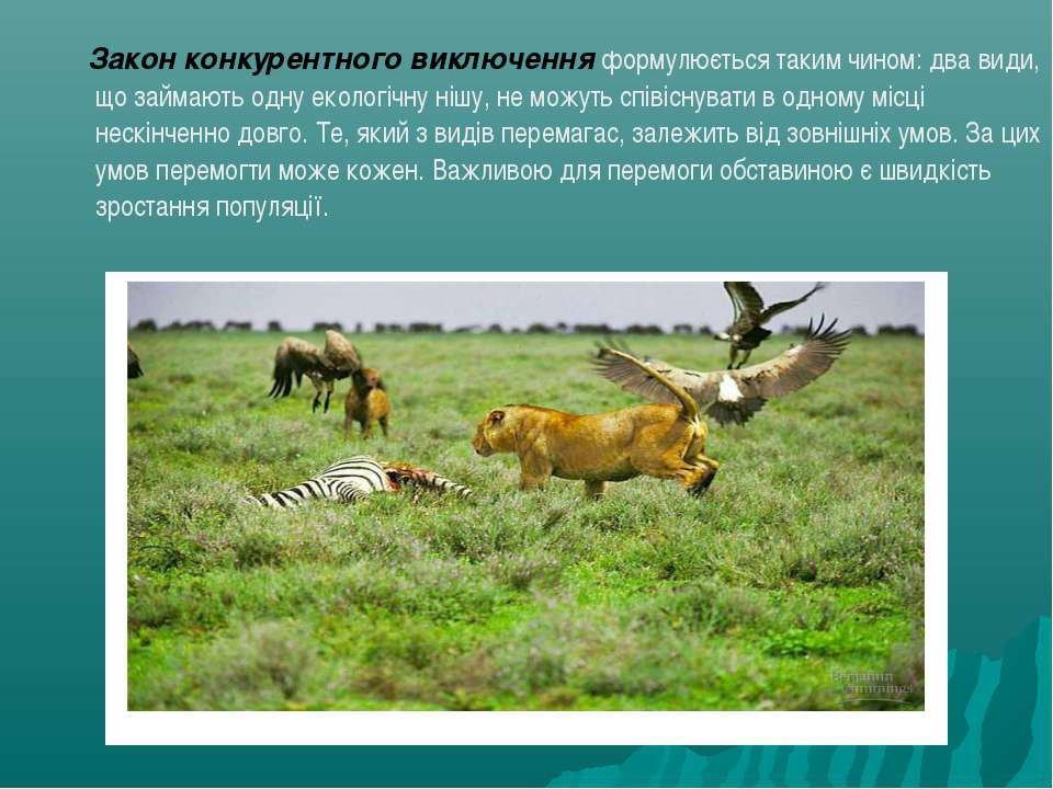 Закон конкурентного виключення формулюється таким чином: два види, що займают...