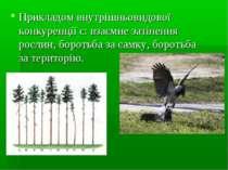 Прикладом внутрішньовидової конкуренції є: взаємне затінення рослин, боротьба...