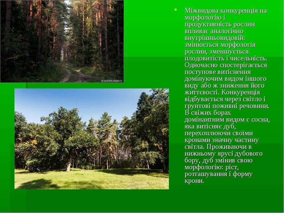 Міжвидова конкуренція на морфологію і продуктивність рослин впливає аналогічн...