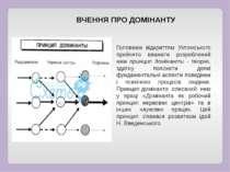 ВЧЕННЯ ПРО ДОМІНАНТУ Головним відкриттям Ухтомського прийнято вважати розробл...