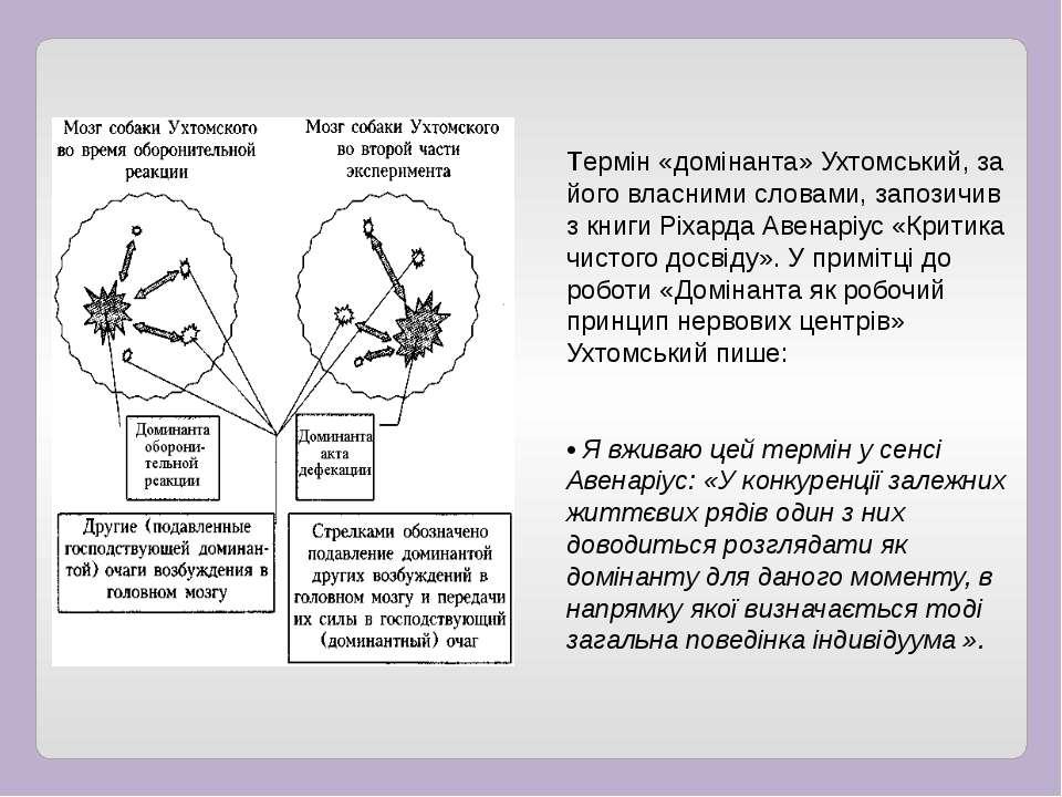 Термін «домінанта» Ухтомський, за його власними словами, запозичив з книги Рі...