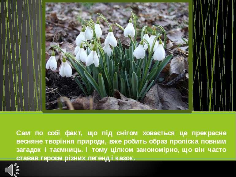 Сам по собі факт, що під снігом ховається це прекрасне весняне творіння приро...