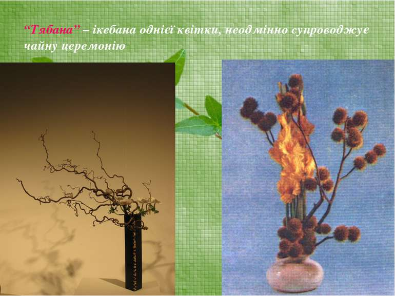 """""""Тябана"""" – ікебана однієї квітки, неодмінно супроводжує чайну церемонію"""