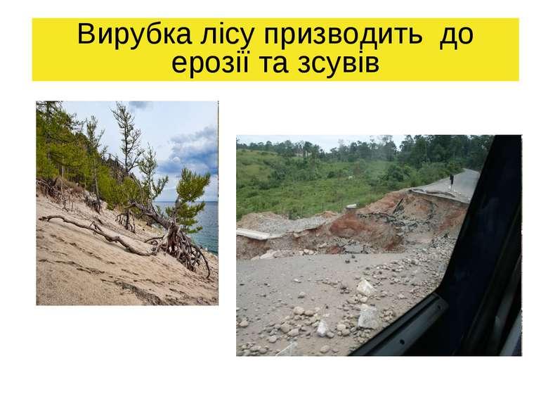 Вирубка лісу призводить до ерозії та зсувів