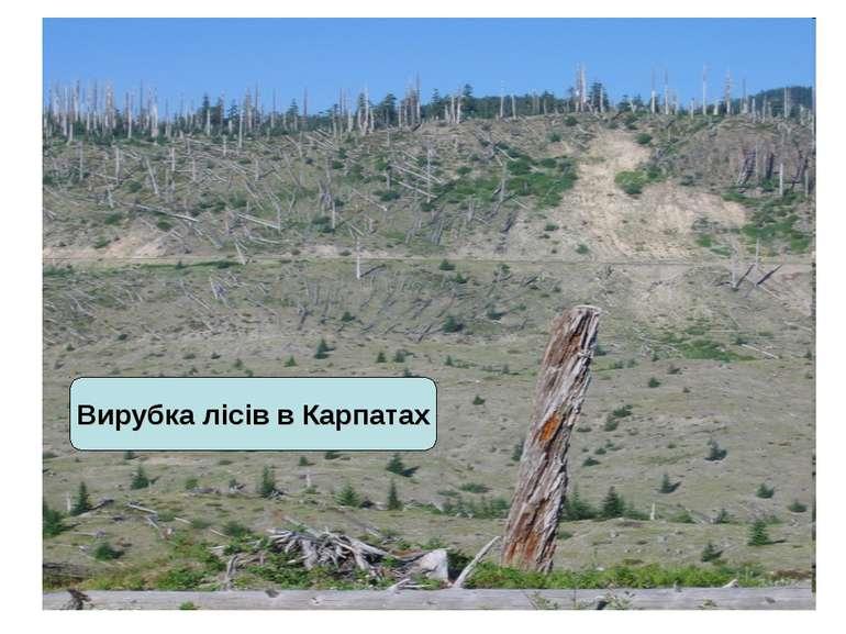 Вирубка лісів в Карпатах