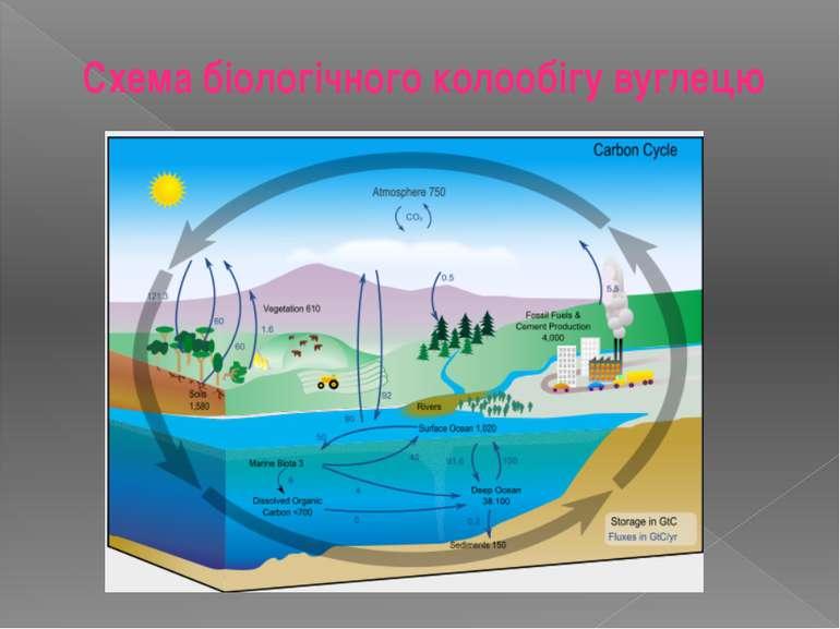 Схема біологічного колообігу вуглецю