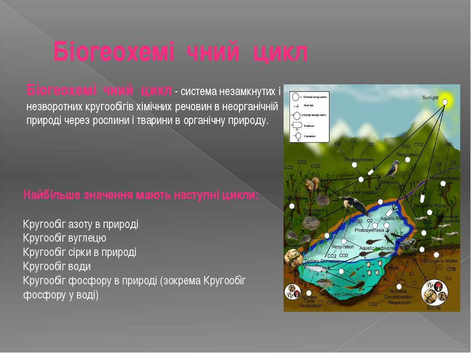 Біогеохемі чний цикл Біогеохемі чний цикл- система незамкнутих і незворотни...