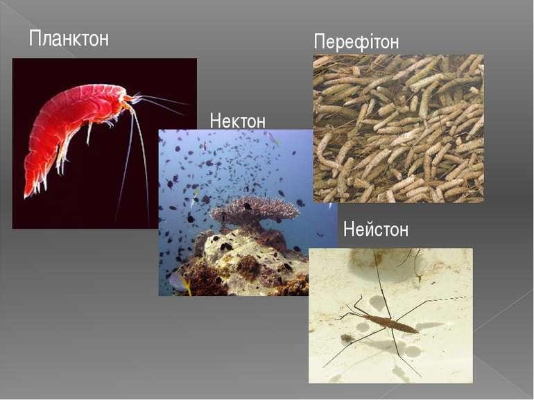 Планктон Нектон Перефітон Нейстон