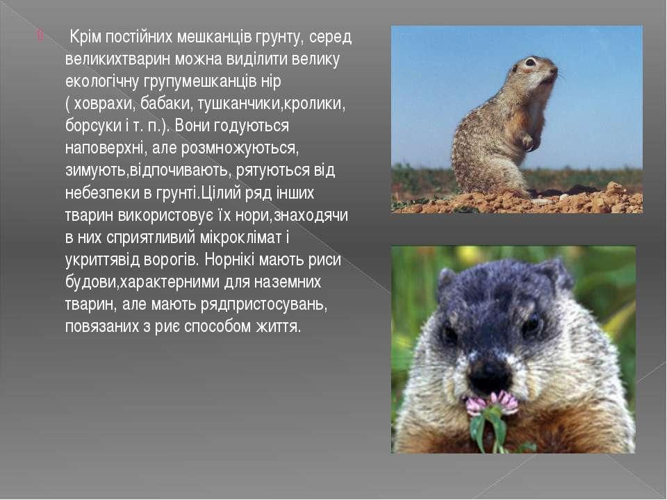 Крім постійних мешканців грунту, серед великихтварин можна виділити велику е...
