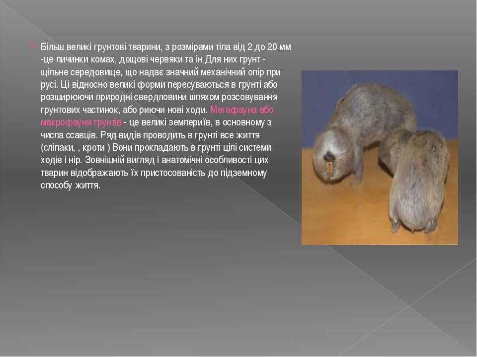 Більш великі грунтові тварини, з розмірами тіла від 2 до 20 мм -це личинки ко...