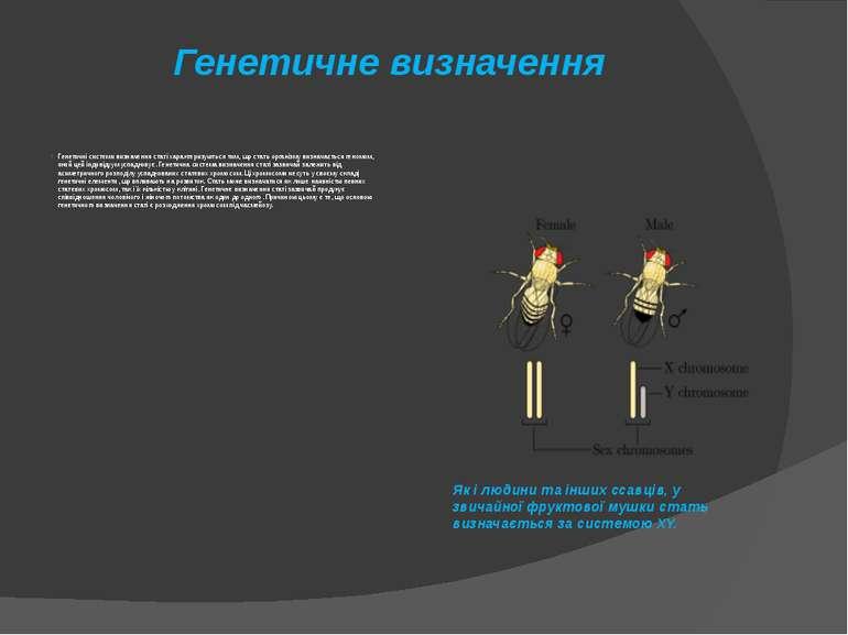 Генетичне визначення Генетичні системи визначення статі характеризуються тим,...