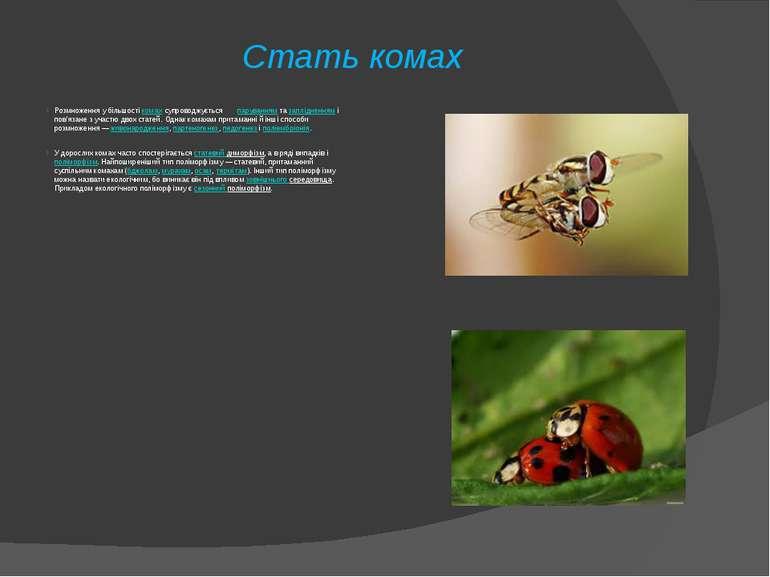 Стать комах Розмноження у більшостікомахсупроводжується паруваннямтазапл...