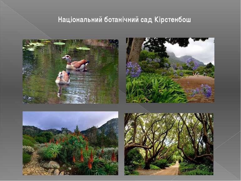 Національний ботанічний сад Кірстенбош