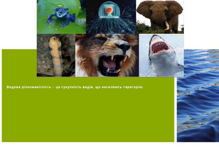 Видова різноманітність – це сукупність видів, що населяють територію.