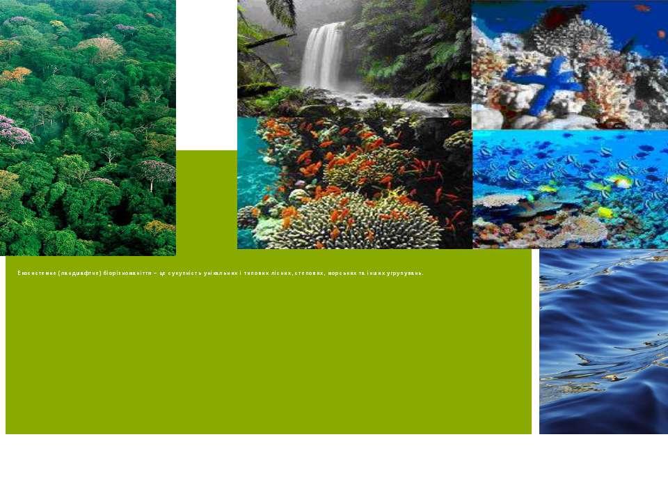 Екосистемне (ландшафтне) біорізноманіття – це сукупність унікальних і типових...