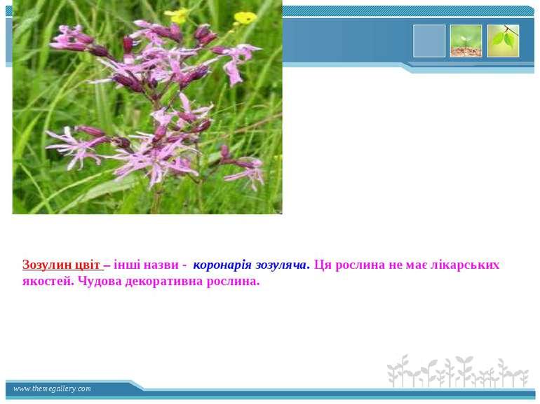 Зозулин цвіт – інші назви - коронарія зозуляча. Ця рослина не має лікарських ...