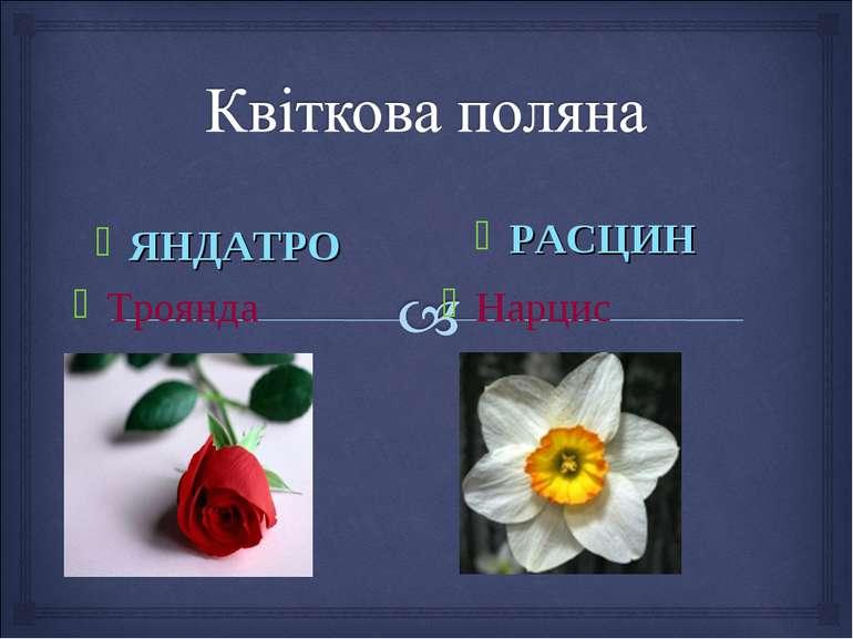 Троянда РАСЦИН ЯНДАТРО Нарцис