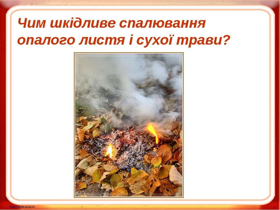 Чим шкідливе спалювання опалого листя і сухої трави?