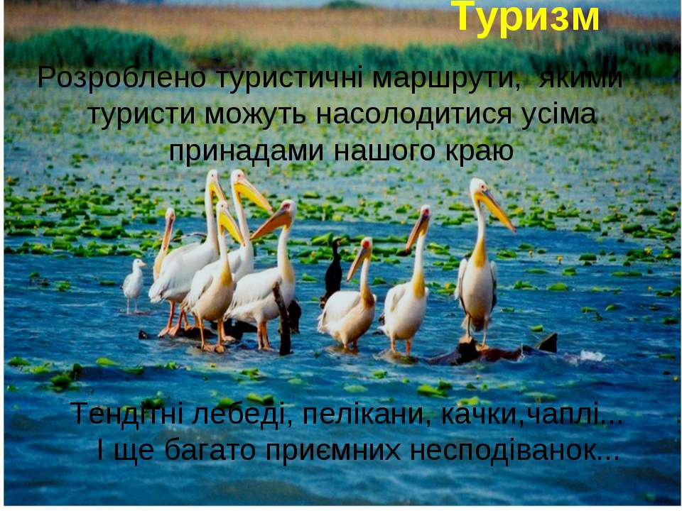 Туризм Розроблено туристичні маршрути, якими туристи можуть насолодитися усім...