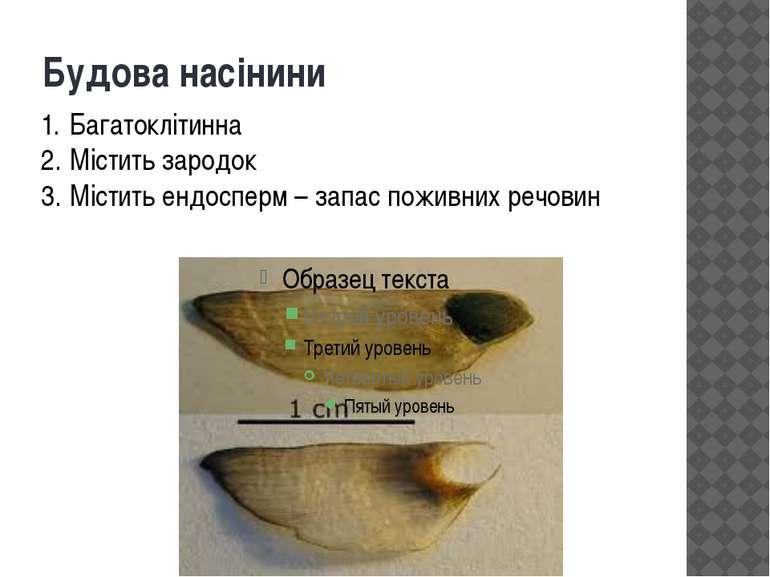 Будова насінини Багатоклітинна Містить зародок Містить ендосперм – запас пожи...