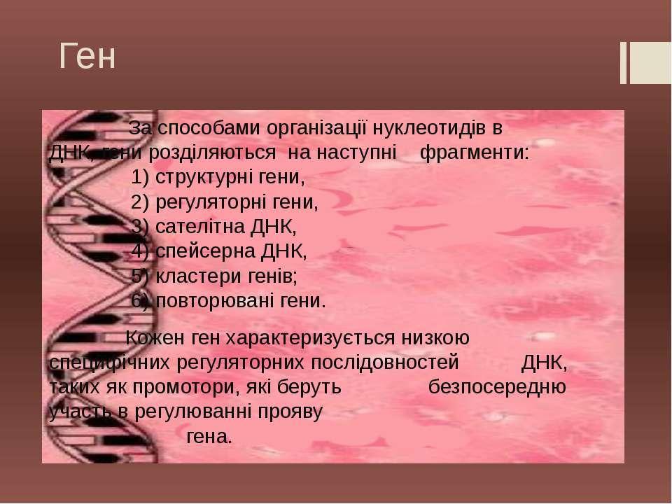 Ген За способами організації нуклеотидів в ДНК, гени розділяються на наступні...
