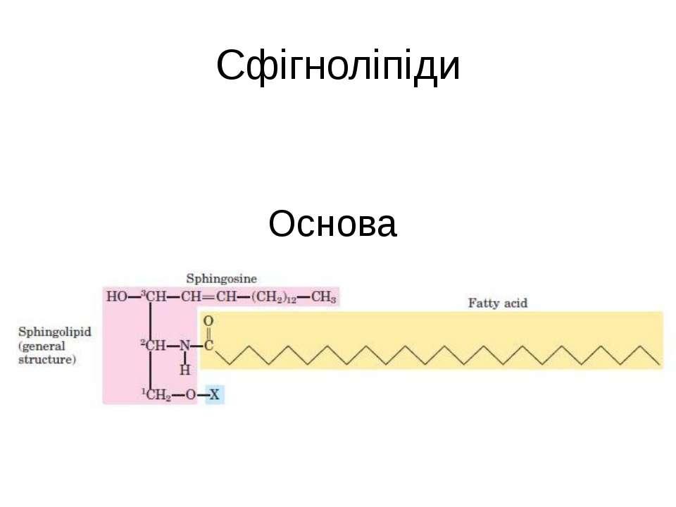 Сфігноліпіди Основа