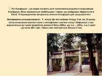 Ліс Конфуція – ця назва служить для позначення родового кладовища Конфуція....