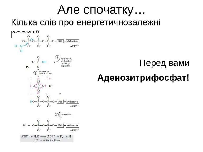 Але спочатку… Кілька слів про енергетичнозалежні реакції… Перед вами Аденозит...