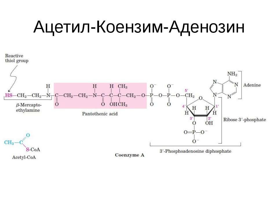 Ацетил-Коензим-Аденозин