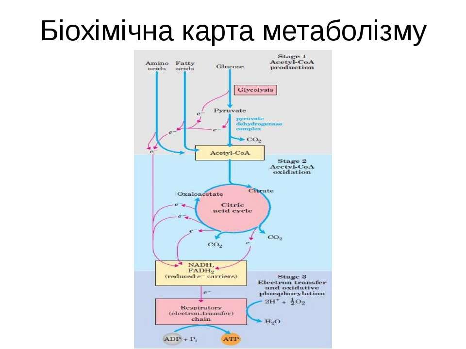 Біохімічна карта метаболізму