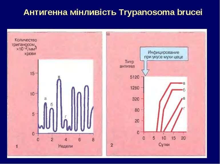 Антигенна мінливість Trypanosoma brucei
