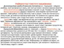 Найпростіші товстого кишківника: Дизентерийная амеба (Entamoeba histolytica) ...