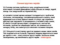 11.Статева система трубчатого типу, роздільностатеві, властивий статевий димо...