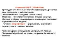 Родина ФІЛЯРІЇ ( Filarioidea) Група дрібних біогельмінтів нитчастої форми, ро...