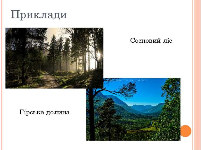 Приклади Сосновий ліс Гірська долина