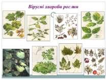 Вірусні хвороби рослин