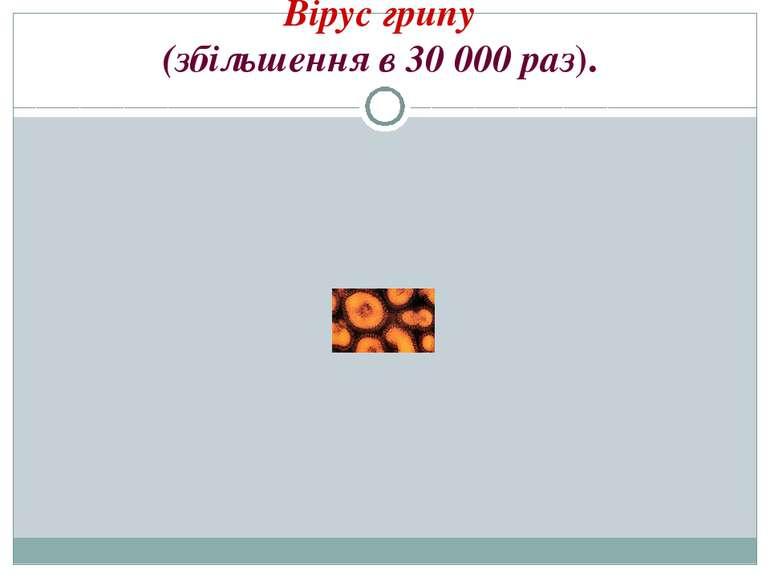Вірус грипу (збільшення в 30000 раз).