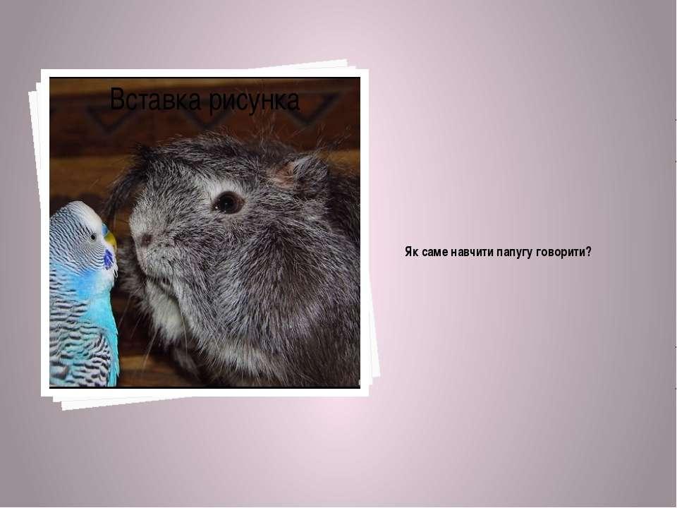 Як саме навчити папугу говорити?