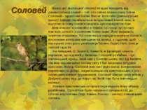 Соловей Назва цієї маленької співочої пташки походить від давньоруської славі...