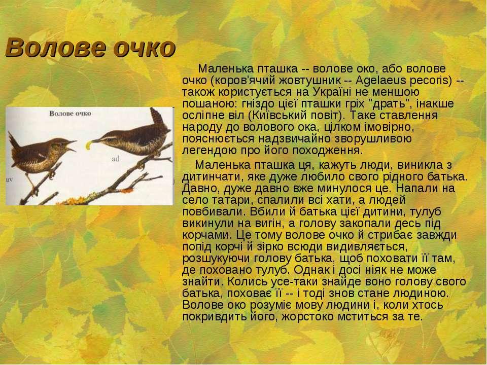 Волове очко Маленька пташка -- волове око, або волове очко (коров'ячий жовтуш...