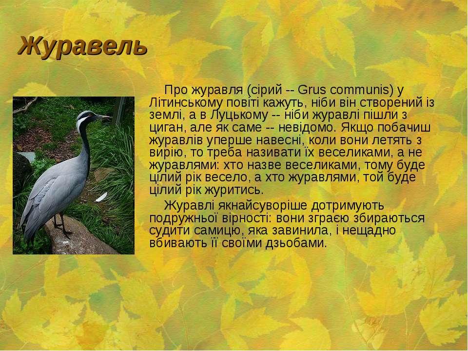 Журавель Про журавля (сірий -- Grus communis) у Літинському повіті кажуть, ні...