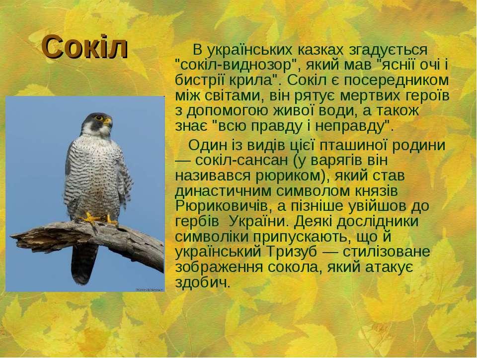 """Сокіл В українських казках згадується """"сокіл-виднозор"""", який мав """"яснії очі і..."""