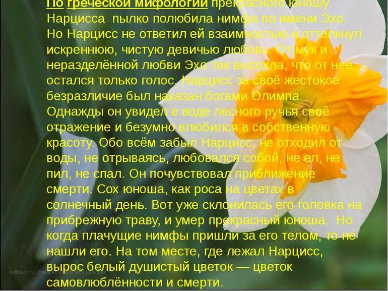 По греческой мифологии прекрасного юношу Нарцисса пылко полюбила нимфа по име...
