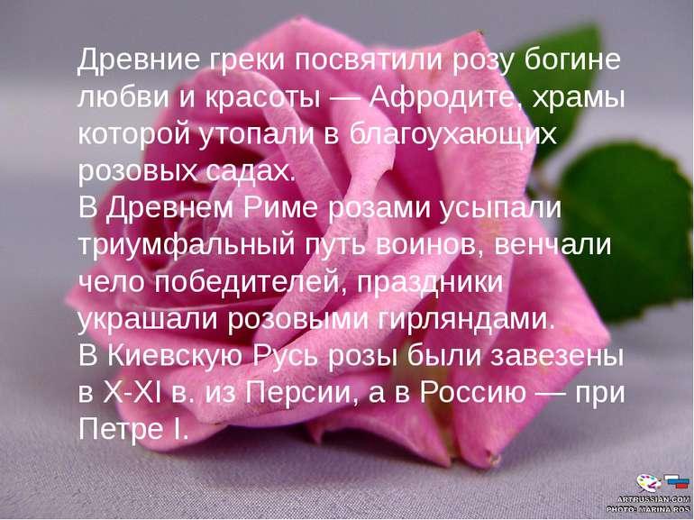 Древние греки посвятили розу богине любви и красоты — Афродите, храмы которой...