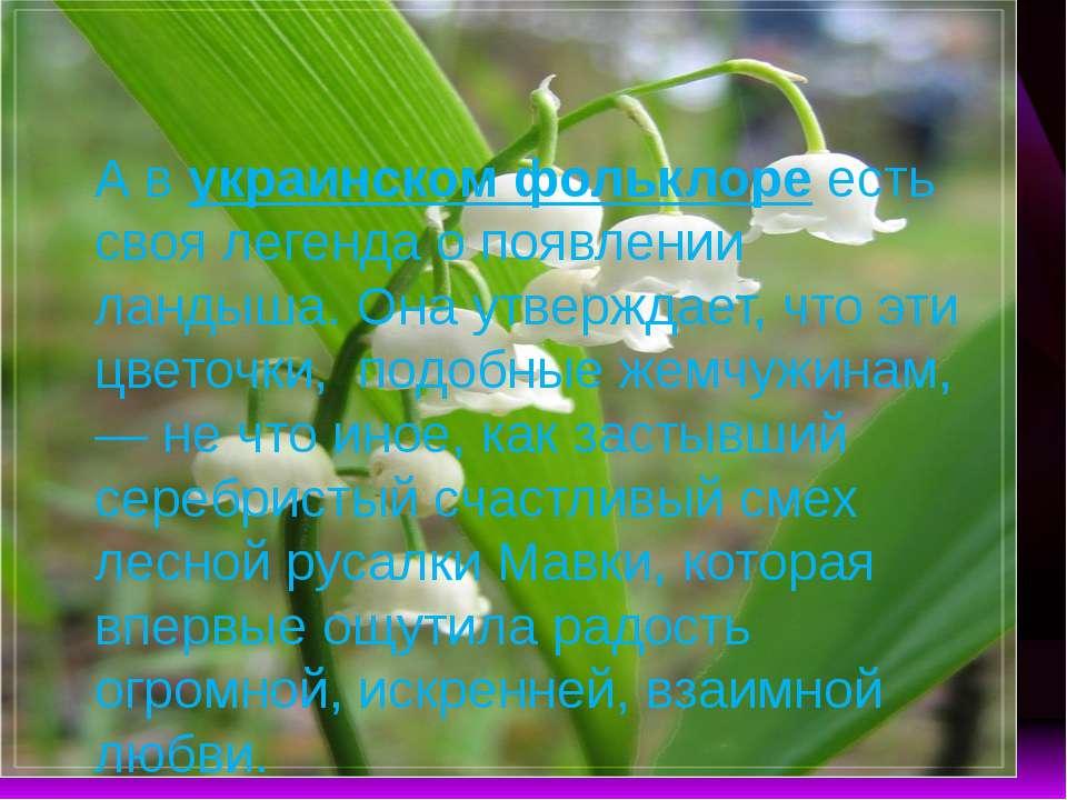 А в украинском фольклоре есть своя легенда о появлении ландыша. Она утверждае...