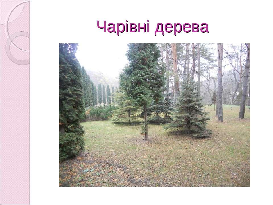 Чарівні дерева