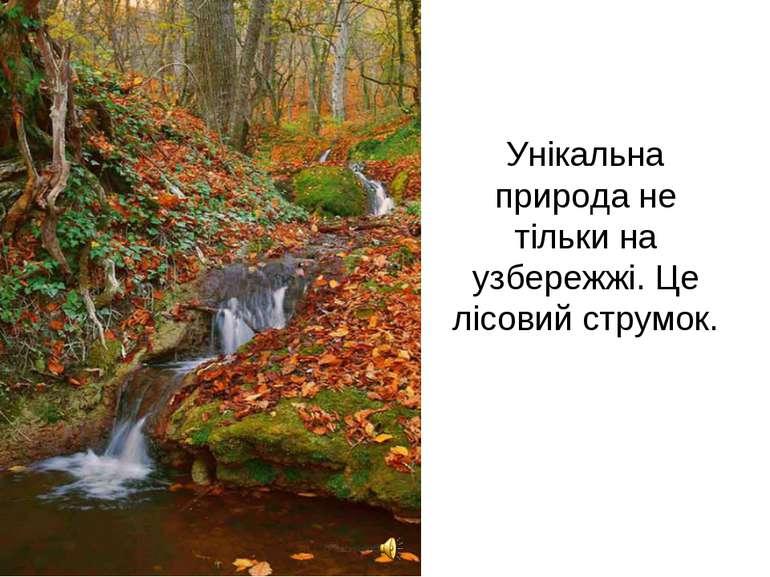 Унікальна природа не тільки на узбережжі. Це лісовий струмок.