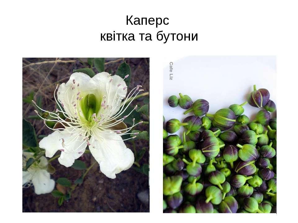Каперс квітка та бутони