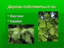 Дерева поділяються на: Листяні Хвойні