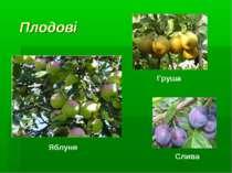 Плодові Яблуня Груша Слива